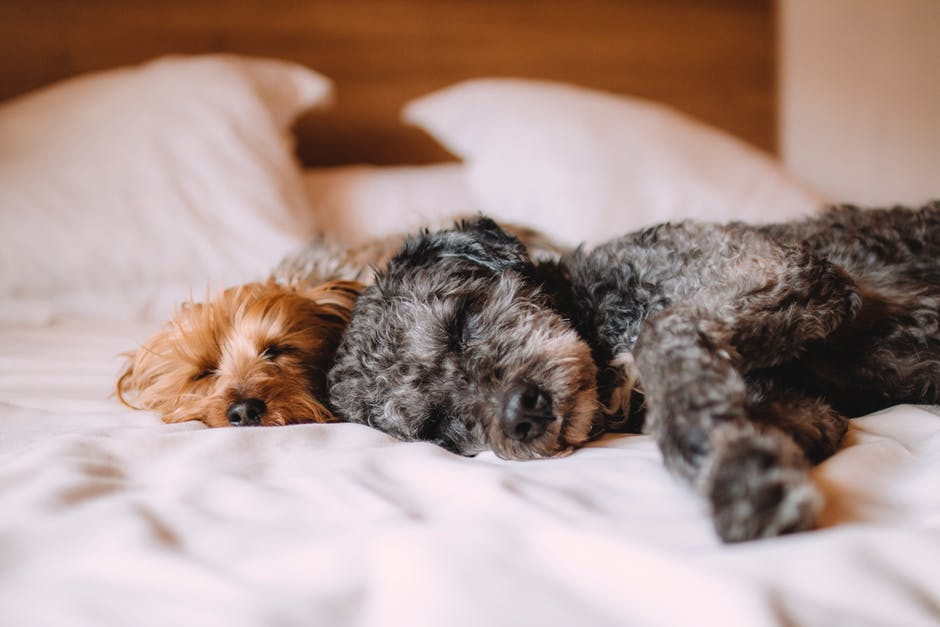 The 9 Best Pet Friendly Hotels in America
