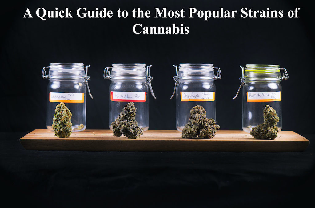 A Quick Guide to the Most Popular Strains of Cannabis