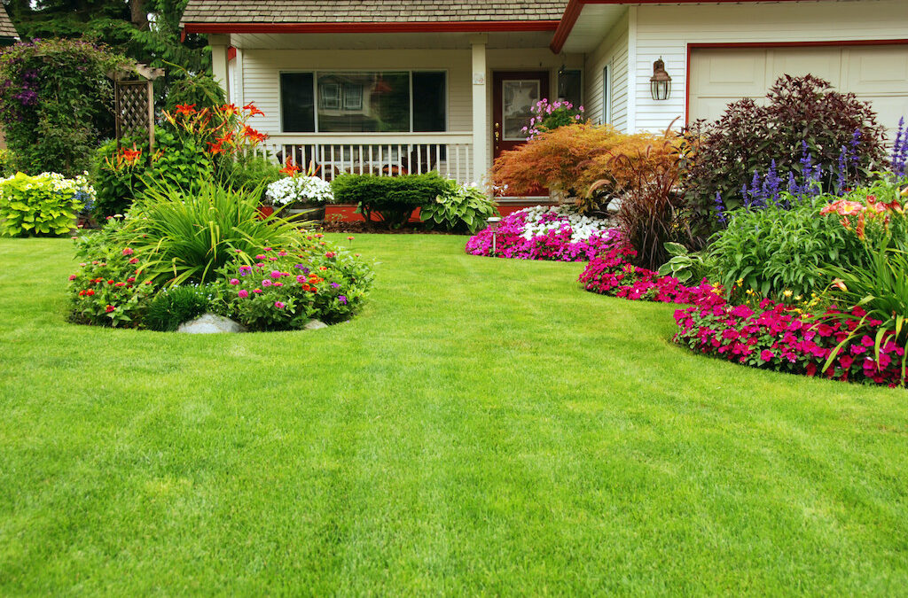 5 Simple Tips to Maintain a Healthy Lawn