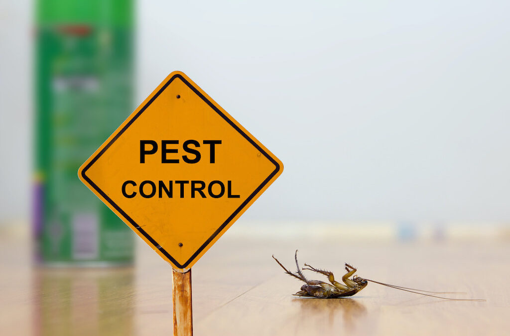 Looking for Pest Treatment Services? Factors to Consider When Hiring Pest Control Professionals