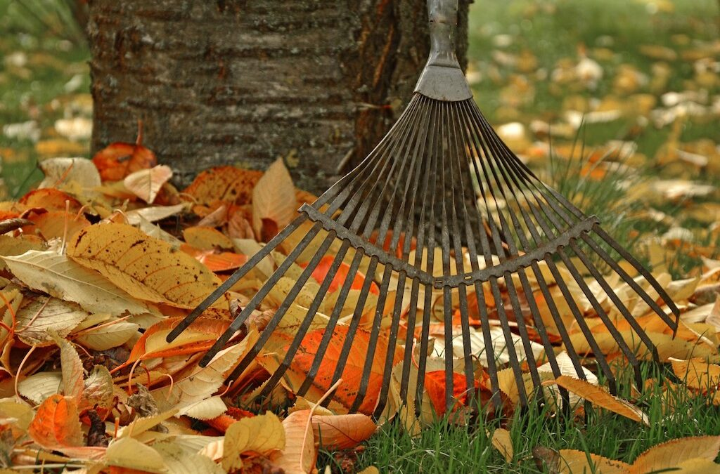 Fall Lawn Care Tips to Keep Your Home Ready to Sell