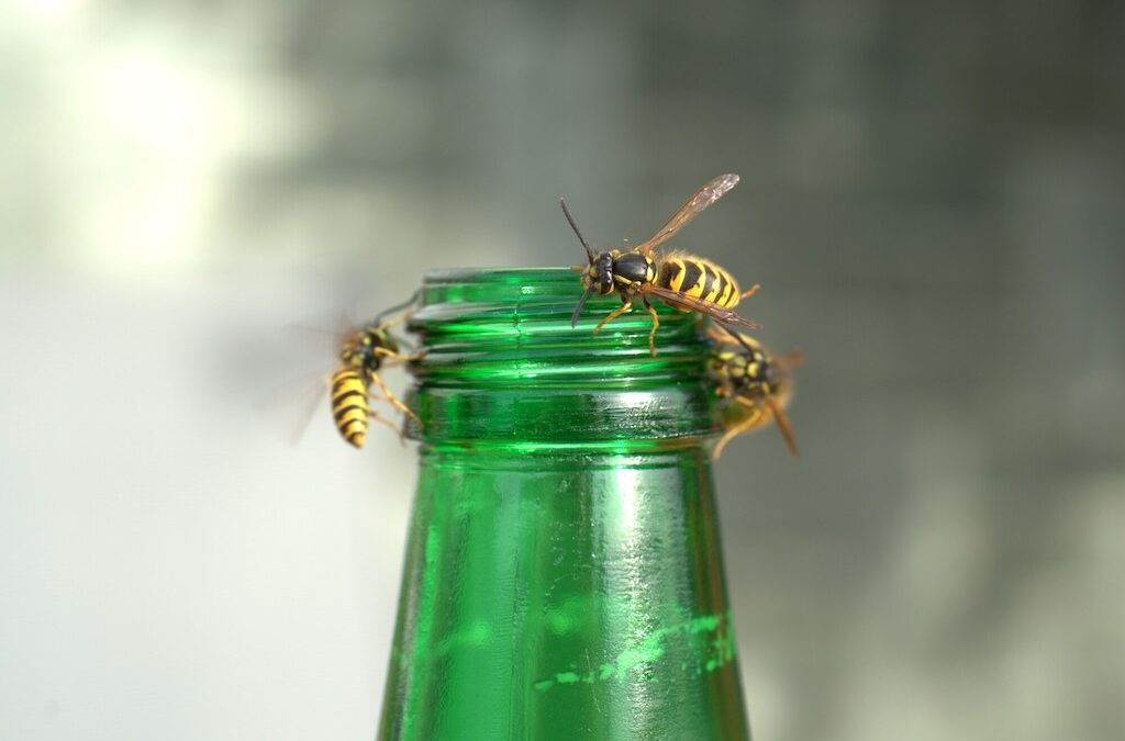 How to Get Rid of Stinging Insects