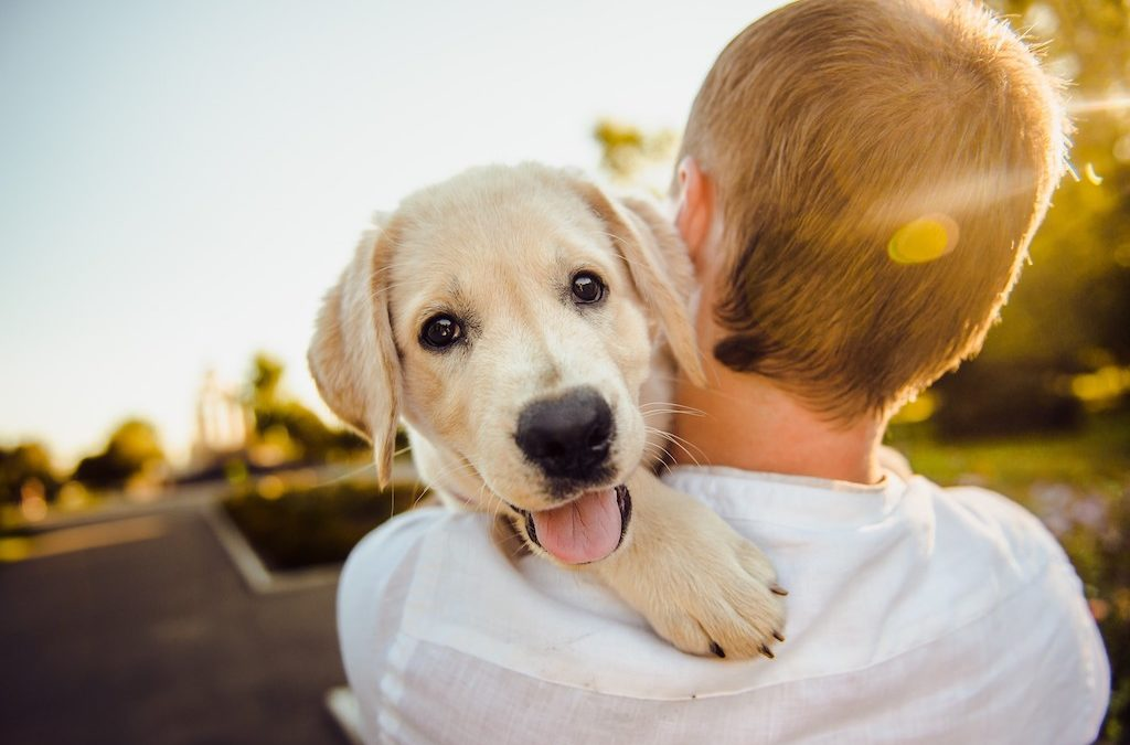Keeping Fido Cheery: How to Tell If Your Dog Is Happy