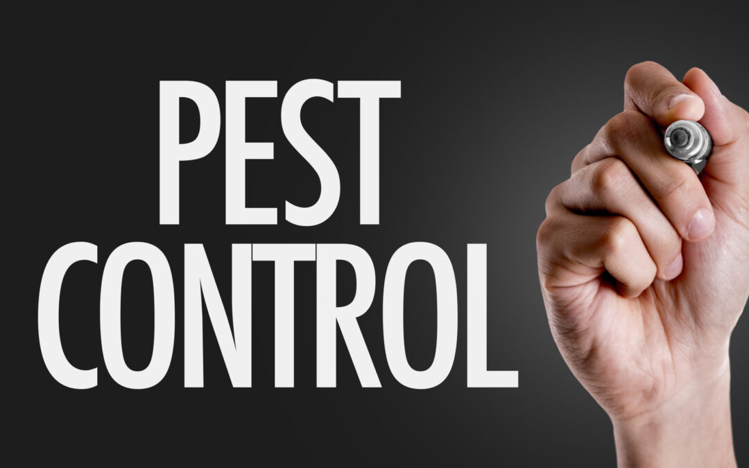 10 Tips for Pest Prevention in Your Home