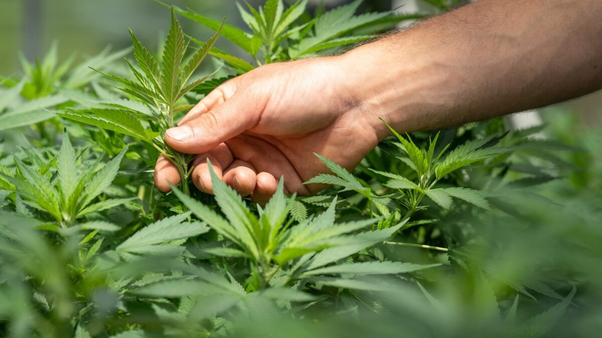 Where to Find the Best Hemp Products in 2021